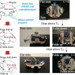 Simple Triple-State Polymer Actuators with Controllable Folding Characteristics