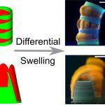 Dual-Gel 4D Printing of Bioinspired Tubes