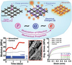 Bioinspired Materials with Self‐Adaptable Mechanical Properties